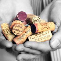 Een aantal verdiepende wijnstudiedagen. Biodynamisch, mousserend, Iconische wijnen.